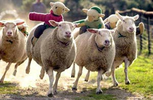 Course de Moutons